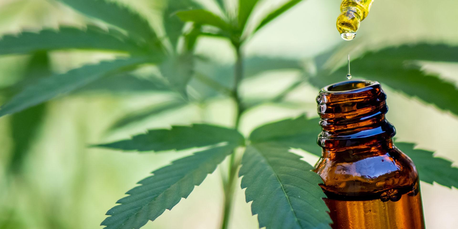 E-liquide à la saveur de cannabis